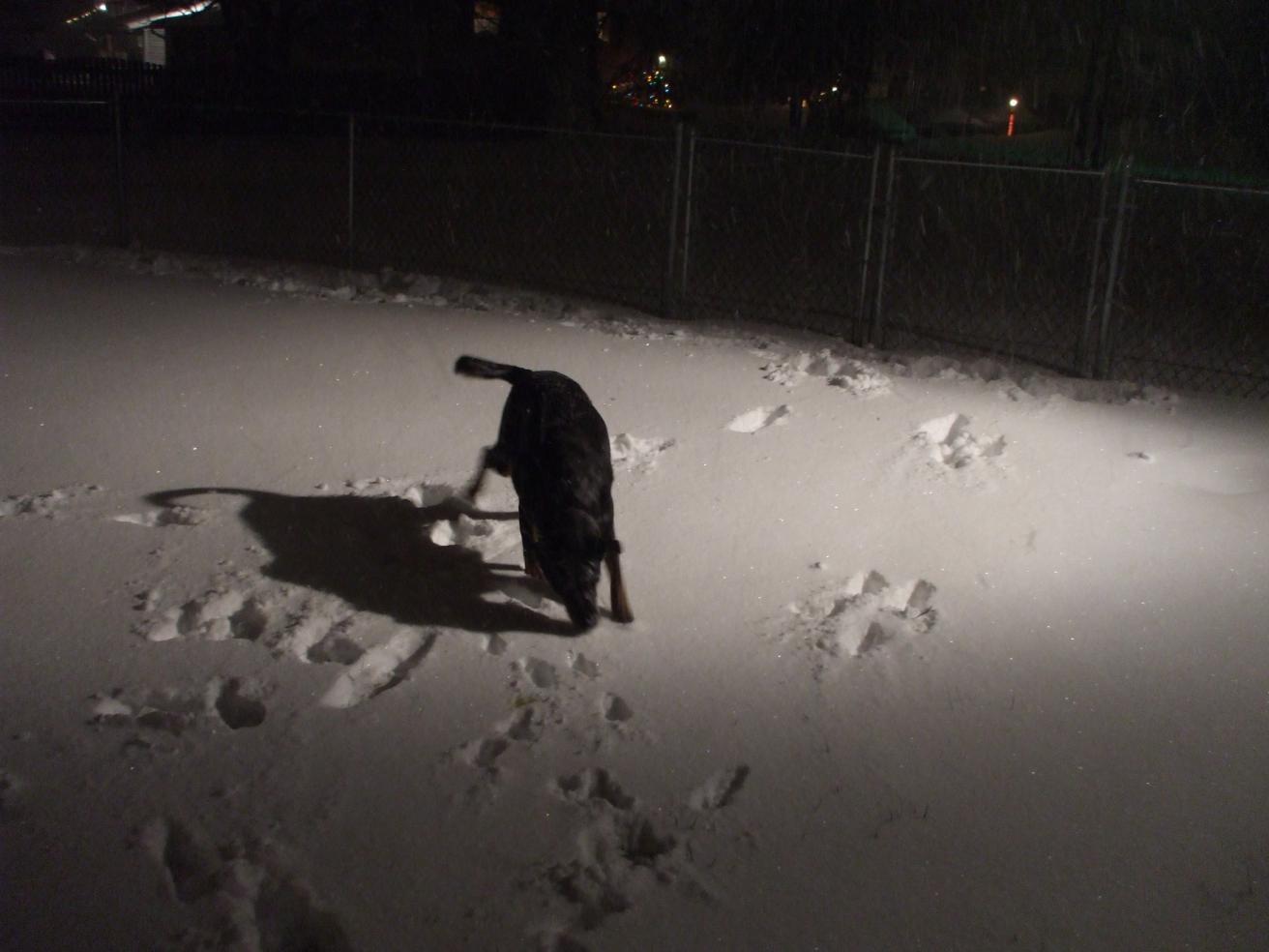 Offical snow pic thread-dscf5489.jpg